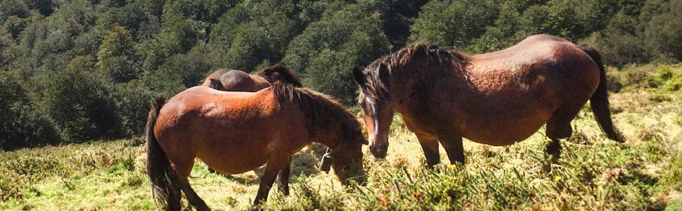 Automatización de la gestión del ganado